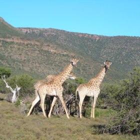 ...and other game, including giraffe, in the valley below.