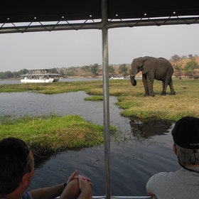 Activities focus on game drives into Chobe National Park and boat trips on the Chobe River...