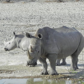...and tracking rhino on foot is an activity well worth taking part in.