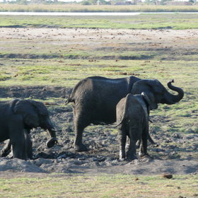 ...which is famous for its huge herds of elephant.
