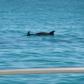 If you're lucky you might spot a pod of dolphins!