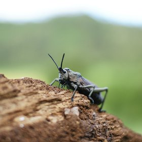 Wildlife-viewing is also challenging. Bug fans have the chance to meet a wide variety of insects…