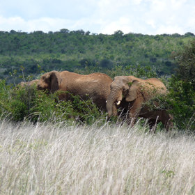 …to game drives in search of elephants…