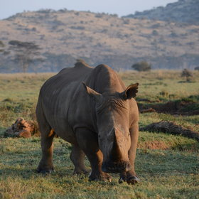 Activities here focus on game drives, which get you close to Lewa's larger residents.