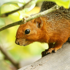 …and this inqusitive and handsomely coloured squirrel.