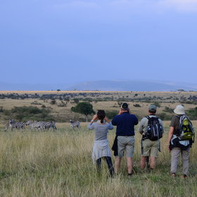 Walking from Elephant Pepper Camp, in the Mara North Conservancy, is a highlight.