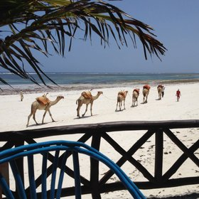 Even here, in the middle of Diani Beach, it can be surprisingly quiet…