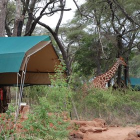 Offbeat Meru is a simple and atmospheric bush camp at the edge of Meru National Park.