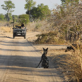 ... best seen on a 4WD game drive...
