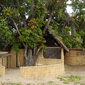 The accommodation at Luwi Bushcamp consists of four reed-and-grass chalets.