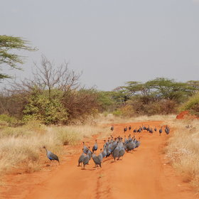 Explore the Samburu National Reserve by road…