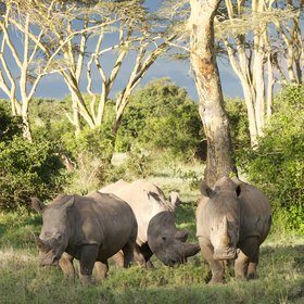 … with the phenomenal rhino population being the biggest draw and highlight.
