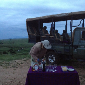 These often finish at dusk, with a sundowner in a good vantage point and a drive back after dark.