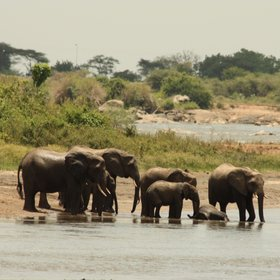 ...elephants gathering at the river...