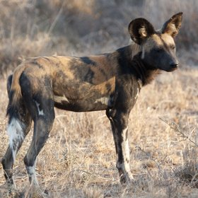 The camp also offers the chance to track wild dog...