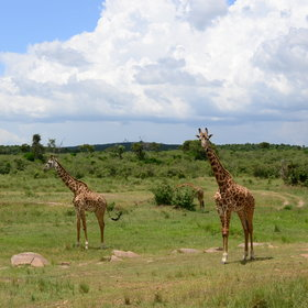 Though its the wildlife, not the luxury, that bring people to this central part of the Mara...