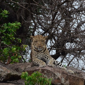 But if you really want the northern Serengeti to yourself, try going in January which is quiet….