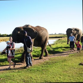 …here you can visit a variety of sanctuaries, including Elephant Sanctuary…