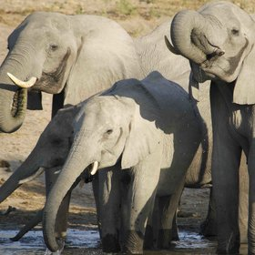 There is an incredible amount of wildlife to spot including large breeding herds of elephants.