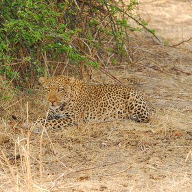 ...including regular leopard sightings.