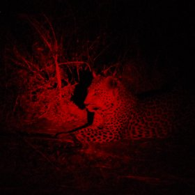 Red lighting is used for night drives, improving your chances of finding nocturnal animals.