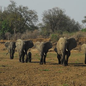 ...where there are sometimes herds of elephants crossing.