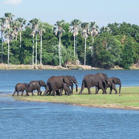 elephants coming to drink at the lagoon  - a regular occurrence in the dry season.