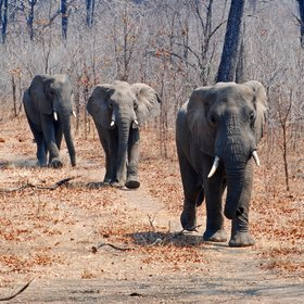 In the dry season, game drives typically see good general game and elephant sightings.
