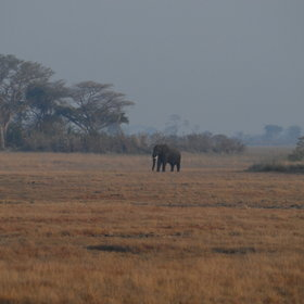 … an elephant passing by…