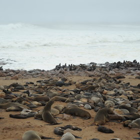 This location is also a perfect playground for a large colony of Cape Fur Seals.