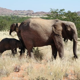 ...and explore the area in search of Namibia's desert adapted elephants.