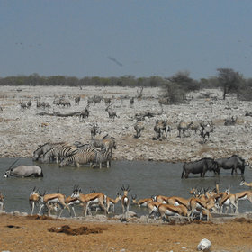 The main attraction of the camp is a large waterhole…