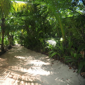 Denis Island has a lush centre...