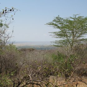 It makes a good base from which to explore Lake Manyara and the Ngorongoro Crater.