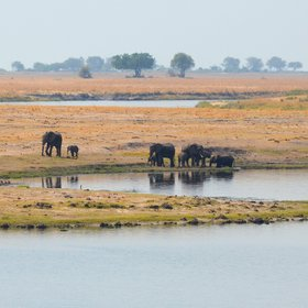 ... the Chobe riverfront area, which draws large numbers of game in the dry season.