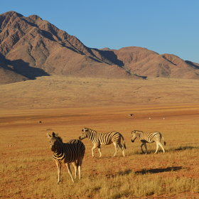 Activities are focused on exploring some fascinating facets of the Namib desert…