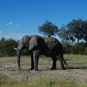 Game drives reveal a variety of wildlife including elephant,…