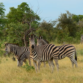 … giraffe, antelope, zebra and much more.