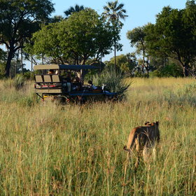 Game drives are conducted in covered open-sided safari vehicles…