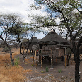 The four thatched and canvas chalets are also raised up on stilts…