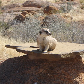 …with a little luck you may get to see some of the cute resident meerkats.