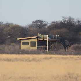 Kalahari Plains Camp is a permanent camp set in the Central Kalahari Game Reserve.