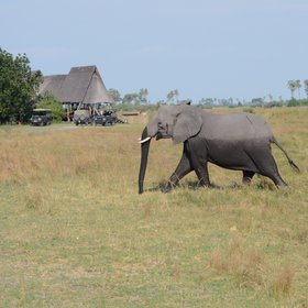 Selinda Camp is situated in the Selinda Concession in the far north of Botswana.