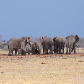 ...that's a big attraction for elephant in the dry season.