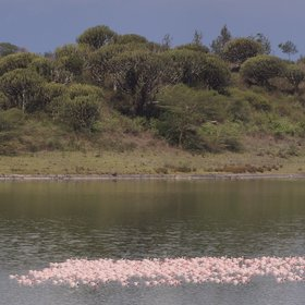 It's not far from the lodge to these lakes, often visited by flocks of flamingos…