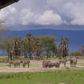 …and spot wildlife at the waterhole in front of the lodge.