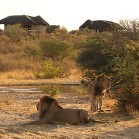 Sometime you can track the animals very close to the camp at the waterhole in front.