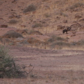 The full day trip to the coast reveals many surprises - brown hyena if you are lucky ...
