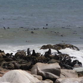 Here you'll visit the Cape fur seal colony at Mowe Bay ...