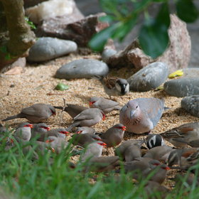 The garden is a lovely oasis for the local birdlife...